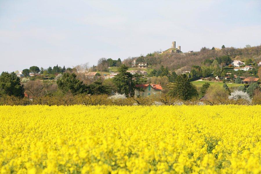 Champ de colza exploitation agricole ARCHE Agglo.JPG