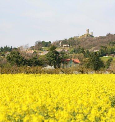 Installation et transmission des exploitations agricoles