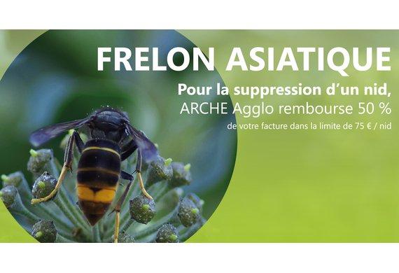 FRELON ASIATIQUE_RS.png