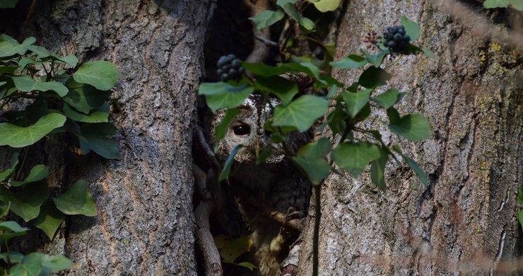 ARCHE Agglo protège la biodiversité