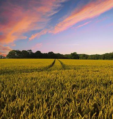 Innovation agricole et changement de pratique