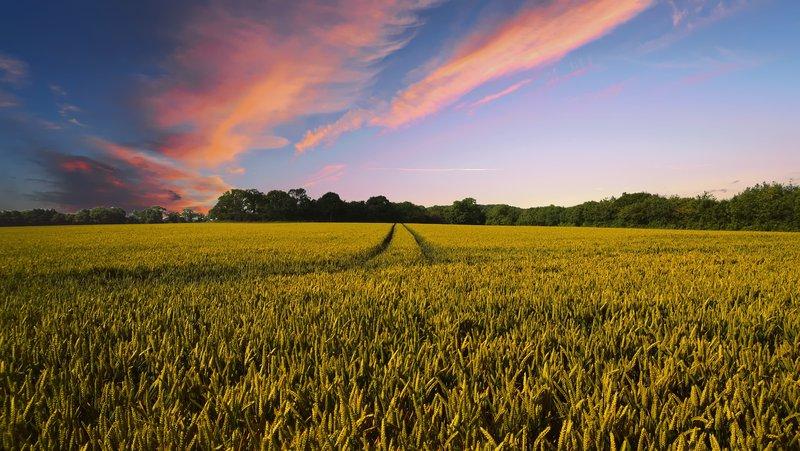 Innovation agricole et changement de pratiques PIXABAY.jpg