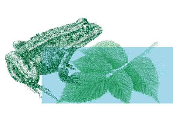 fete-biodiversite-2018_SITE INTERNET_ARCHE-Agglo.jpg